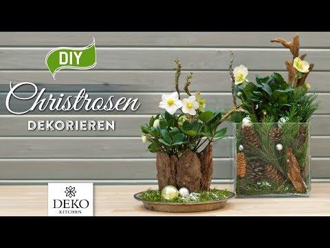DIY-Weihnachtsdeko: Christrosen Effektvoll Dekorieren [How To] Deko Kitchen