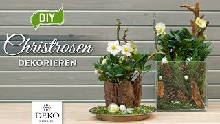 DIY-Weihnachtsdeko: Christrosen effektvoll dekorieren [How to] Deko Kitchen