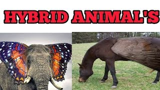 10 Bizarre Hybrid animal That Actually Exist | Intresting Information | Mr Tamil