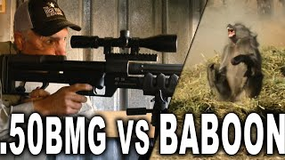 .50 BMG vs Baboon | PEST CONTROL!