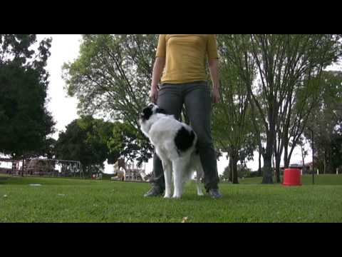 Avatar- Canine Freestyle Routine Improvisations- Dog training