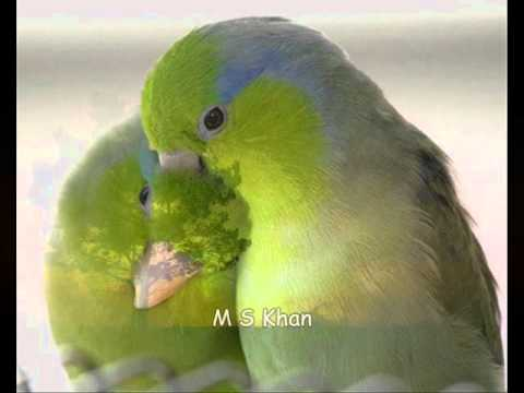M S Khan Basrian  Khuda Humko Aisi Khudai Na De... video