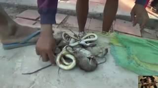 VỀ MIỀN TÂY SĂN CHUỘT ĐỒNG ĐẦY THÚ VỊ -  Hunting Mouse and Snake  in Viet nam