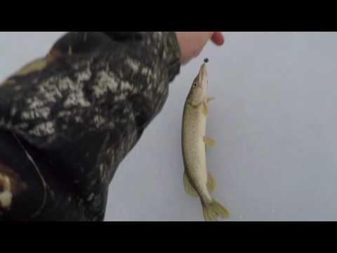 ловля щуки на ишиме видео