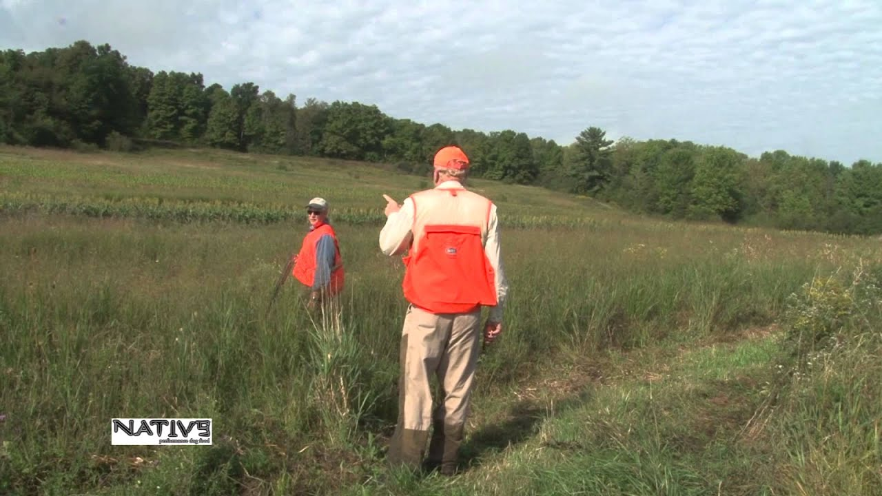Pheasant hunting in vermont youtube for Fishing license vt