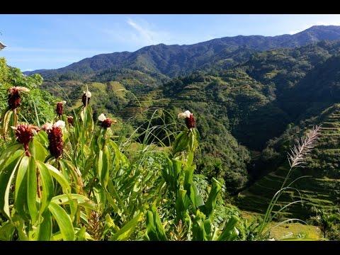 Philippines Vlog: Banaue Rice Terraces
