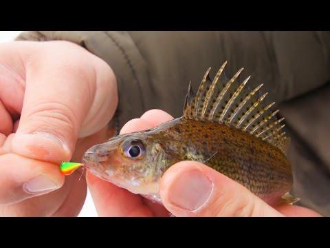 рыба с камерой для рыбалки