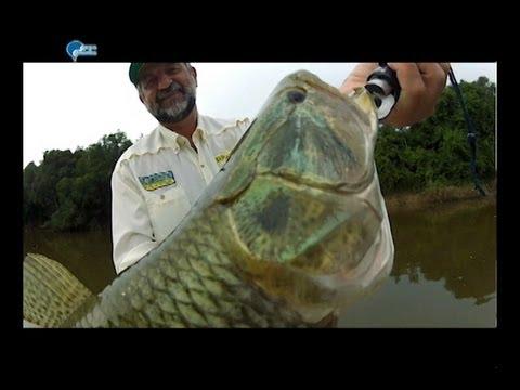 Pescaria de Traíras com Spinner Bait da Deconto