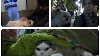 In Seoul and Best Animals! // Nicholalala