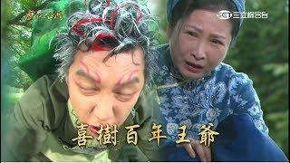 [戲說台灣][綜合][20170902][台南南區]喜樹百年王爺