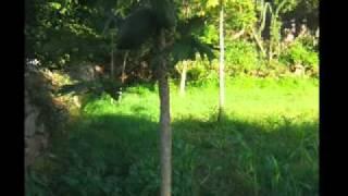 Bella casa de Campo Tamara Honduras