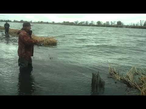 ловля судака с берега днестра