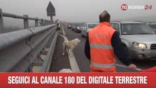 POTENZA BRANCO VEGLIA IL CANE TRAVOLTO DALLE AUTO