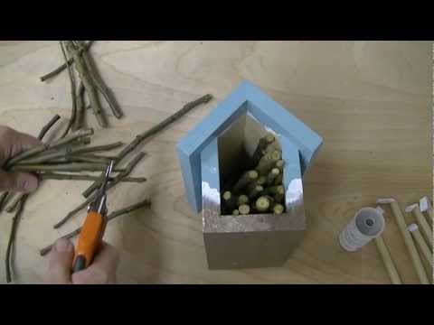 Introduction to Mason Bees
