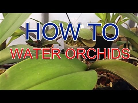 Orchid videolike - How to care for potted orchids ...