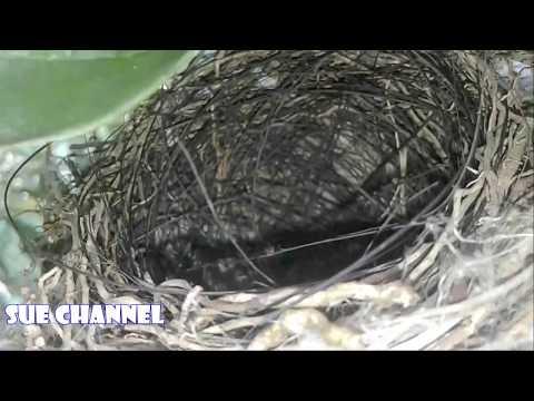 Naik Gunung Mencari Sarang Burung Di Alam Liar