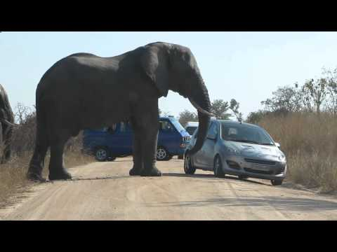 near death experience with an elephant on a dirt road