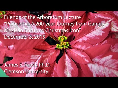"""""""Poinsettia: A 200-year Journey from Gangly Mexican Shrub to Christmas Icon"""""""