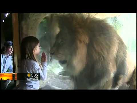 Little girl stays brave in encounter with lion