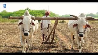 Farmer (Raithu) video Song | Palamuri Pillodi songs || Kalugotla Nageshwar Rao B.tech
