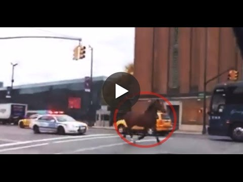 Runaway Carriage Horse in NYC