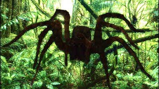 6 Mysterious & Unexplained Events From The Congo That Can't Be Explained