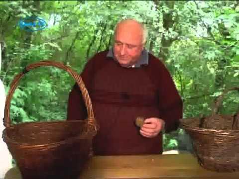 Ehető őszi gombák 1.rész