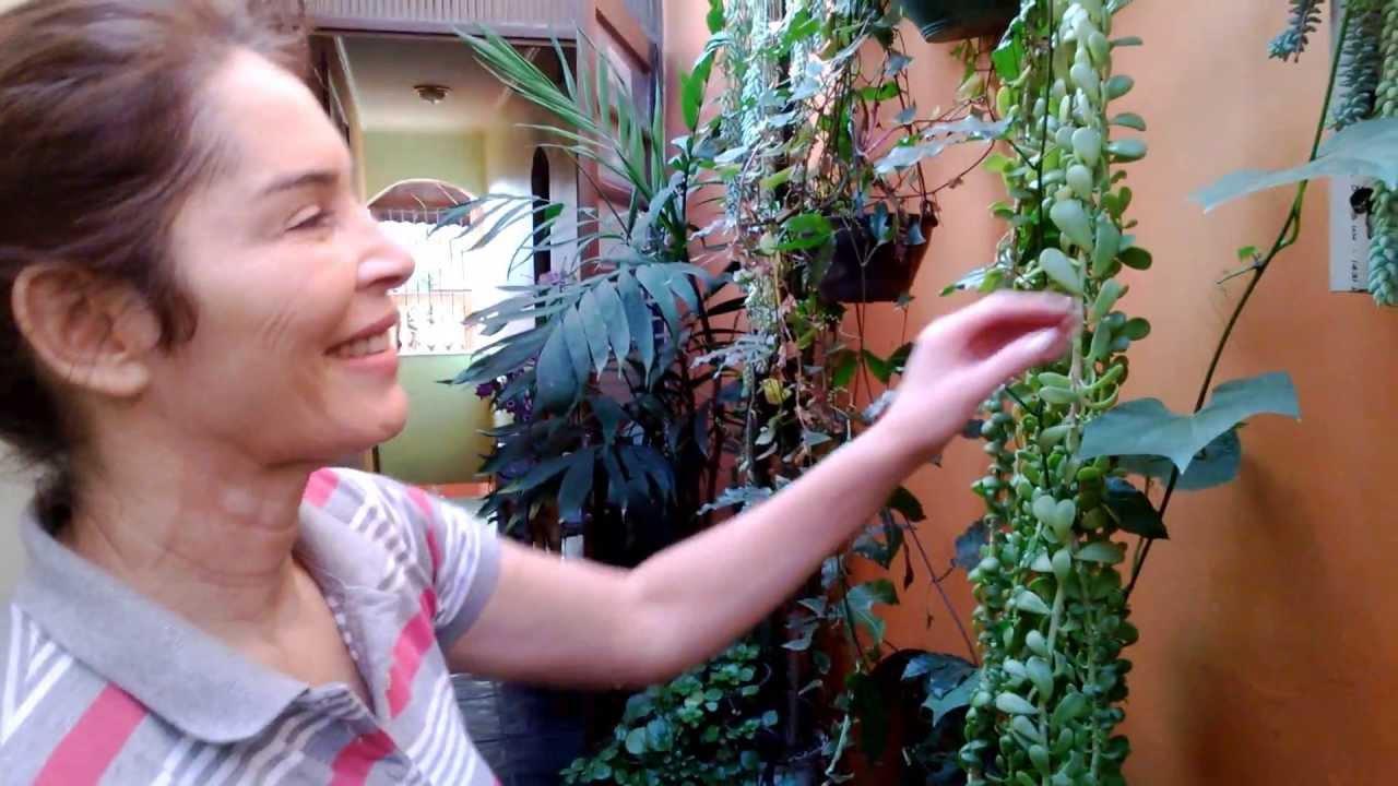 jardim quintal plantas:Como cultivar plantas e flores em pequeno quintal ou Jardim – YouTube