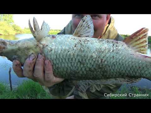 ловля и готовка рыбы видео