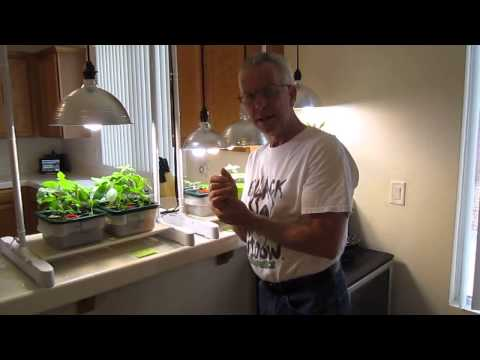 How to properly grow plants using compact floresent lighting (CFL)
