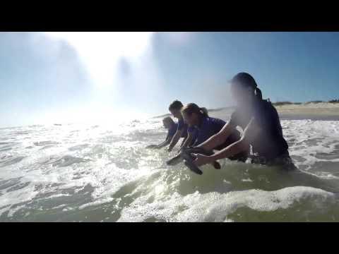 SeaWorld Orlando Rescue Team Returns First Group of 72 Kemp's Ridley Sea Turtles   SeaWorld® Orlando
