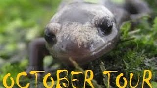 Amphibian Room Tour: October 2014