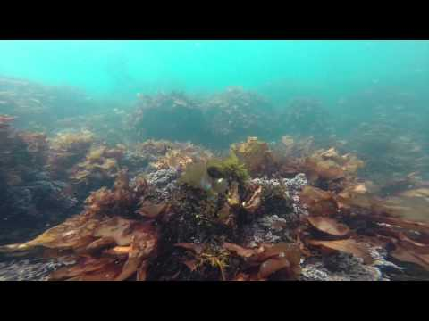 My Marine Park Video Contest: Liz Parissenti, Third Place -- Adult Category