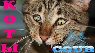 COUB приколы с животными - смешные кошки и котята #3/ Funny animals - funny cats and kittens