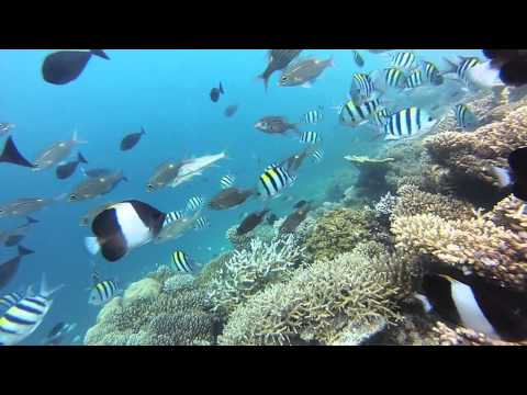 Dream Snorkeling The Maldives Vilamendhoo House Reef 2013 Go Pro Hero 3