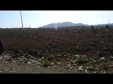 Monkeys Half Way From Makkah To Madinah Sa video