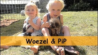 TWEE PUPPY'S !!! | Bellinga Family Vlog #675