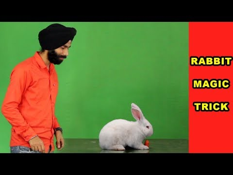 Rabbit magic trick after effects By JIMMY CREATION PHOTOGRAPHY