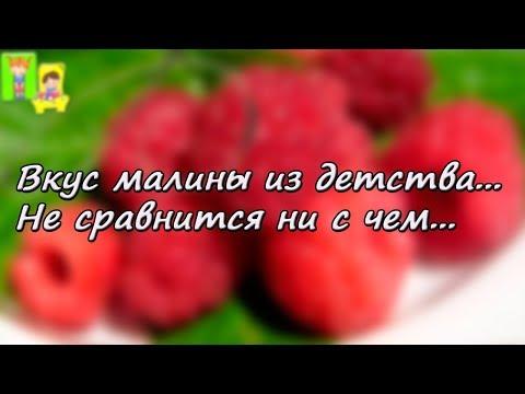 День малинового варенья . Добрый праздник со вкусом малинового варенья