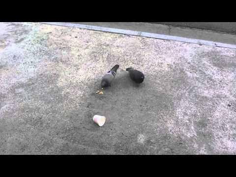 비둘기 카메라