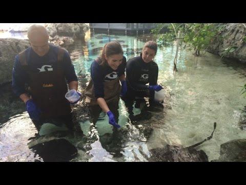 A deeper dive: behind the scenes at the Georgia Aquarium