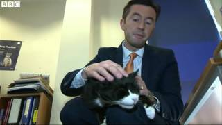 Download Lagu Palmerston the cat starts work as Foreign Office chief mouser   BBC News Gratis STAFABAND