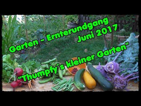 Garten - Ernterundgang Juni 2017 / Thumpfy´s kleiner Garten