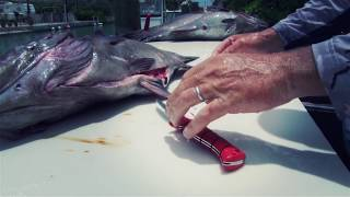 Watch this Bubba Blade slice through 50lb Grouper