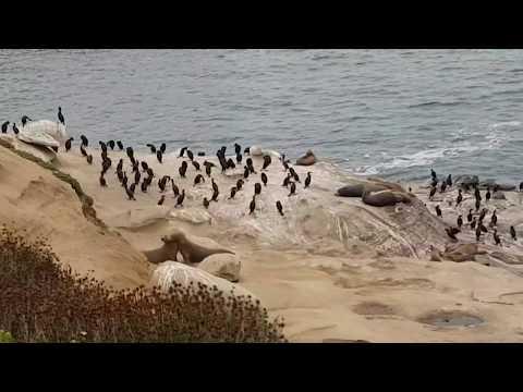 Дальнобой США :: Перевал.  г. Сан Диего. Туманные пляжи Калифорнии