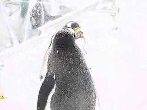 ペンギンの遊び場 トボガン広場 @旭山動物園