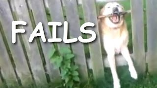 Funny and cute dog fails compilation 2014 - Dogs with sticks version
