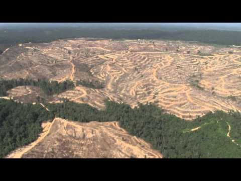 Sumatran Forest Destruction - News Reel