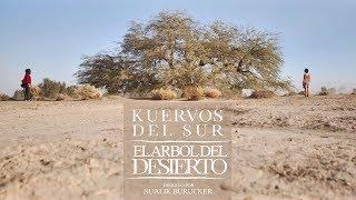 KUERVOS DEL SUR - El árbol del desierto