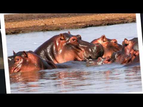 BEST OF TANZANIA TRAVEL VIDEO